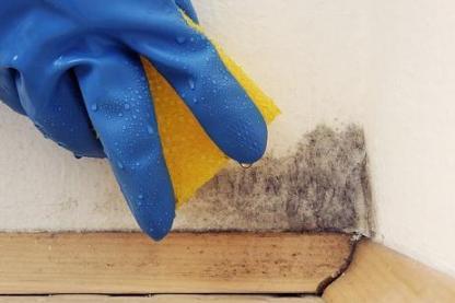 como eliminar el moho de casa